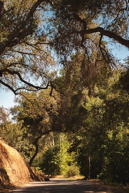 Road, Woods, San Francisco, California, Scene, Trail