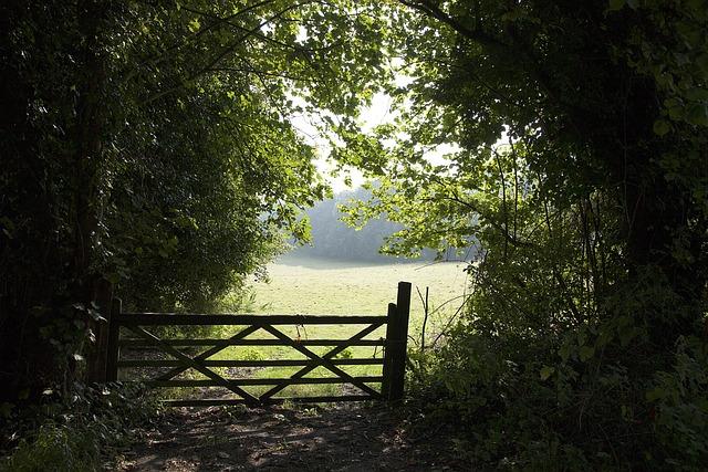 Gate, Field, Bush, Green Nature, Countryside, Scenery