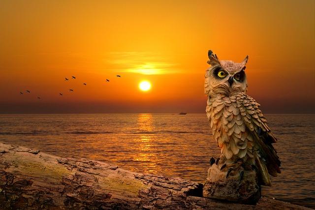 Scenery, Sunset, Dusk, Owl, Portrait, Animal Portrait