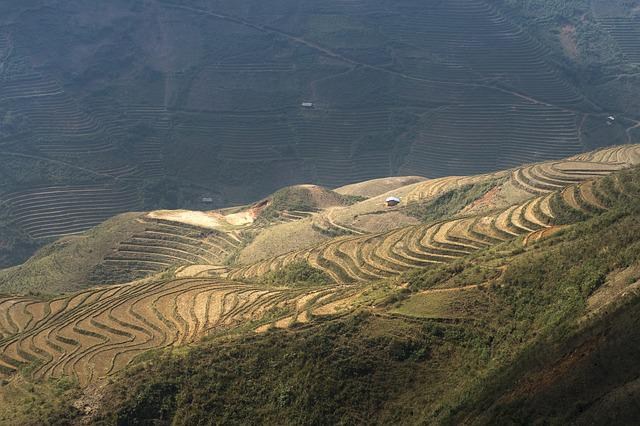 Terraces, Scenery, Sơnla, Moc Chau, Magical, Field