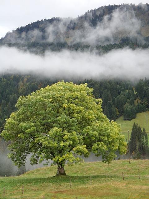 Tree, Nature, Landscape, Grass, Wood, Scenic, Autumn