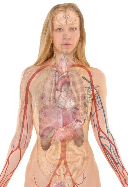 Anatomy, Woman, Human, Body, Skin, Organs, Schema, Lung