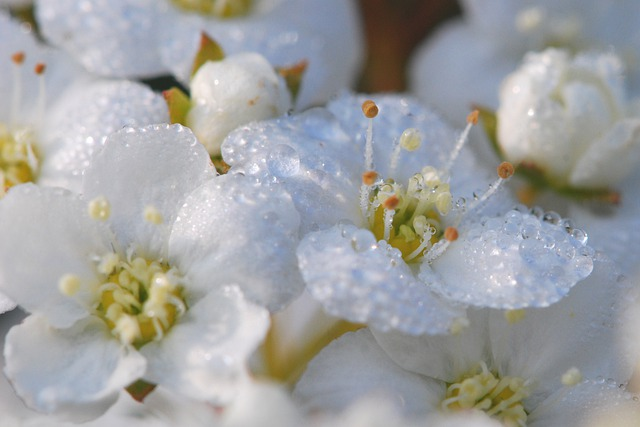 Flowers, White, Close, Macro, Schlehe, Spring
