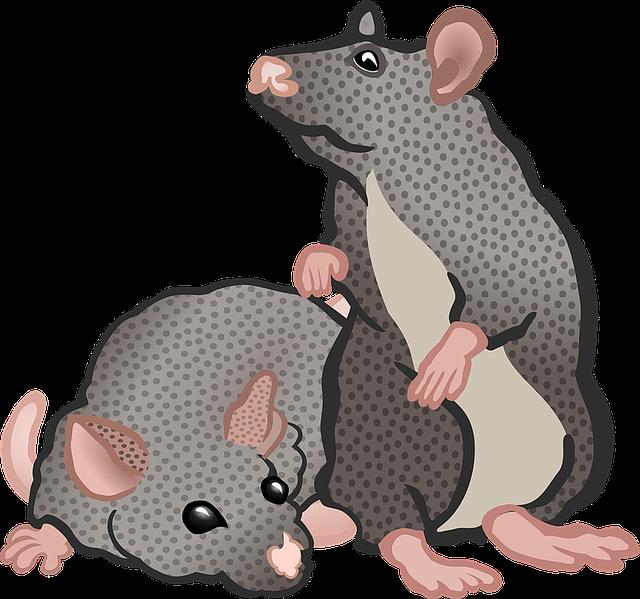 Animal, Animals, Education, Mice, Mouse, School, Tier