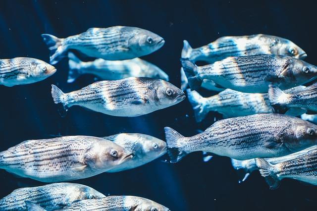 Animals, Close-up, Fishes, School Of Fish, Underwater