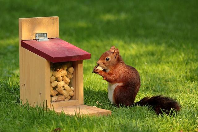 Animal, Squirrel, Sciurus, Bird, Meal, Peanuts