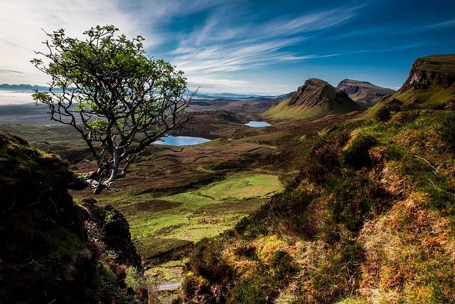 Landscape, Quairaing, Scotland, Isle Of Skye, Tree