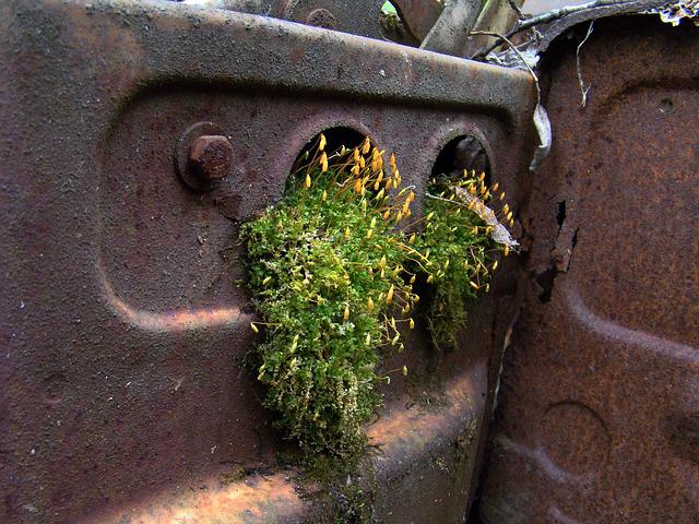 Rust, Moss, Scrap, Automotive Shredder Residue