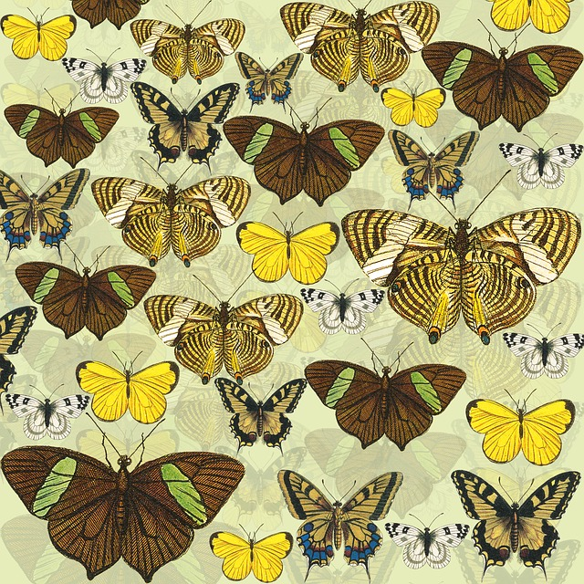 Butterflies, Yellow, Scrapbook Background, Butterfly