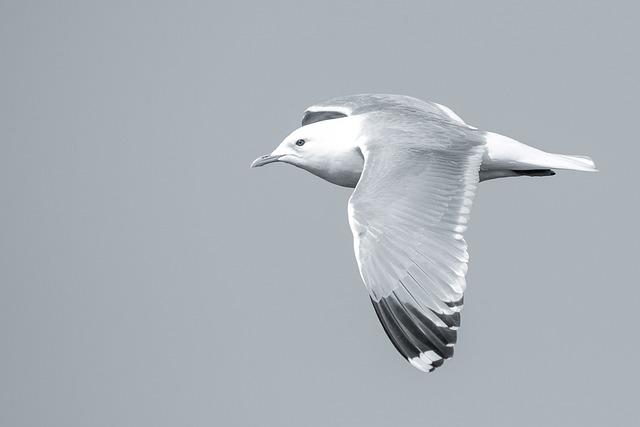 Bird, Seagull, Fly, Summer, Feather, Screaming, Sea