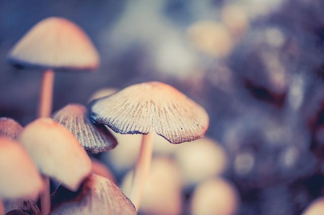 Mushrooms, Forest Floor, Screen Fungus, Disc Fungus
