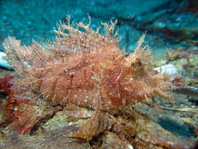Underwater, Scuba Diving, Fauna, Marine, Fish