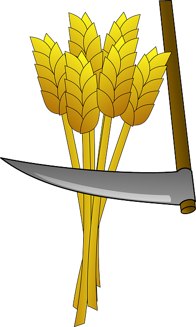 Wheat, Food, Farm, Harvest, Tool, Scythe, Crop, Field
