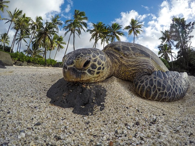 Sea, Turtle, Reptile, Aquatic, Animal, Beach, Sand