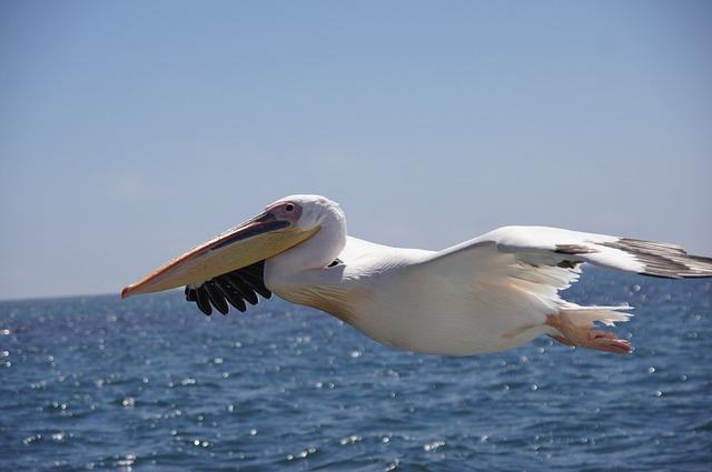 Waters, Bird, Sea, Nature, Animal World, Coast