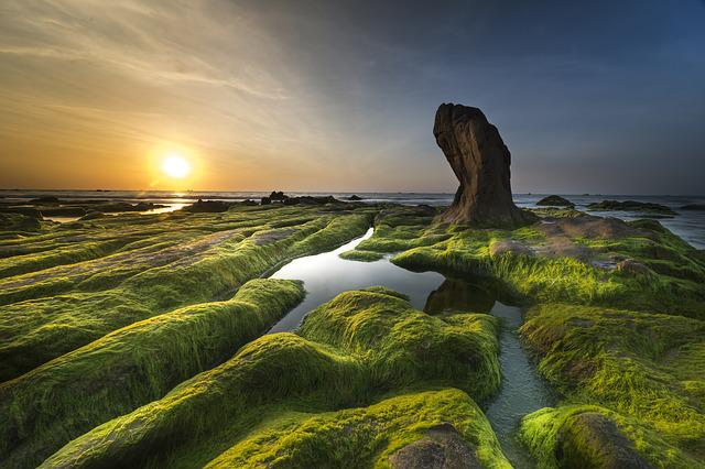 Coast, Algae, Sea, Beach, Shore, Background, Green