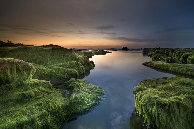 Coast, Algae, Sea, Beach, Shore, Background, Green