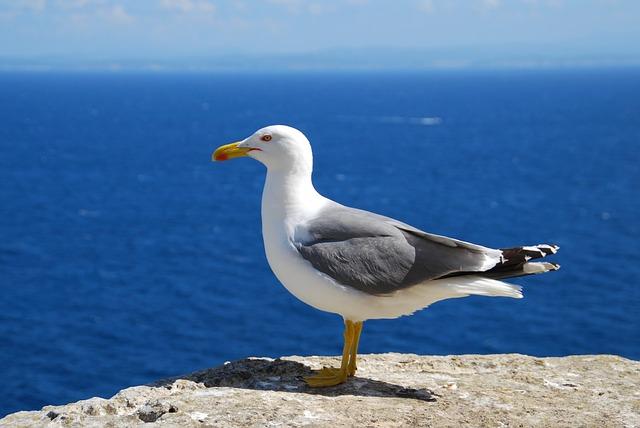 Seagull, Sea, Bird, Seevogel, Corsica, Vision