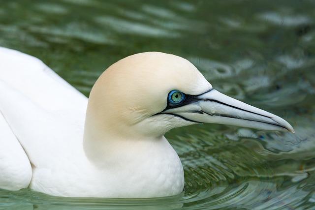 Boobies, Bird, Close, Sea Birds, Animal