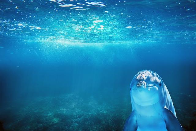 Sea, Blue, Dolphin, Animal, Blue Animals, Blue Sea