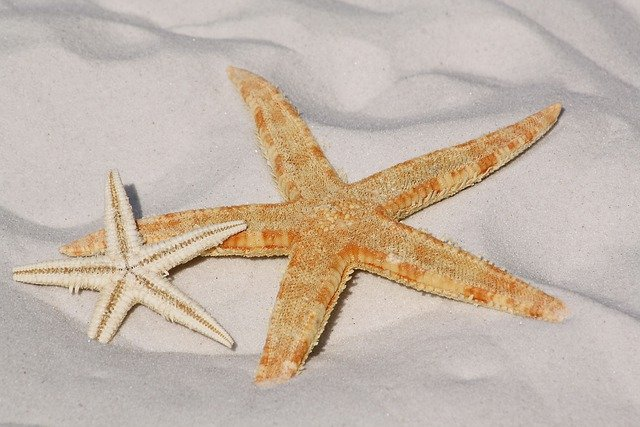 Starfish, Sand, Beach, Sea, Water, Lake, Bodnar, Bank