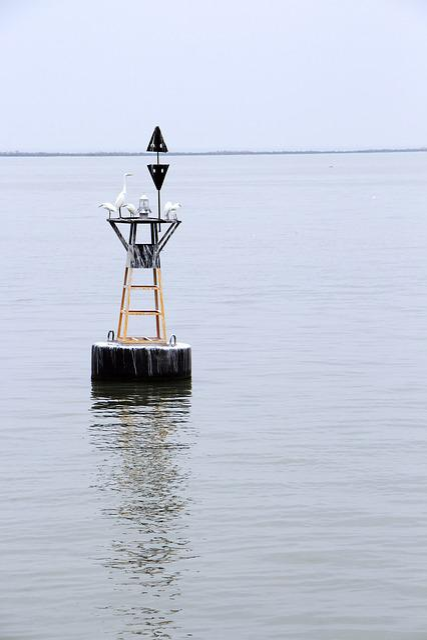 Sea, Buoy, Bird