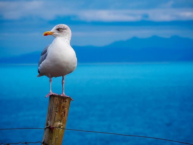 Seagull, Gull, Bird, Wildlife, Sea, Ocean, Closeup