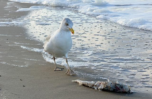 Waters, Sea, Bird, Beach, Coast