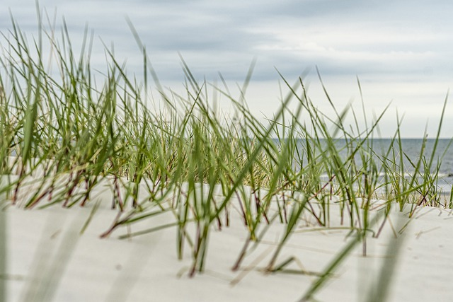 Beach, Water, Baltic Sea, Sea, Vacations, Summer, Coast