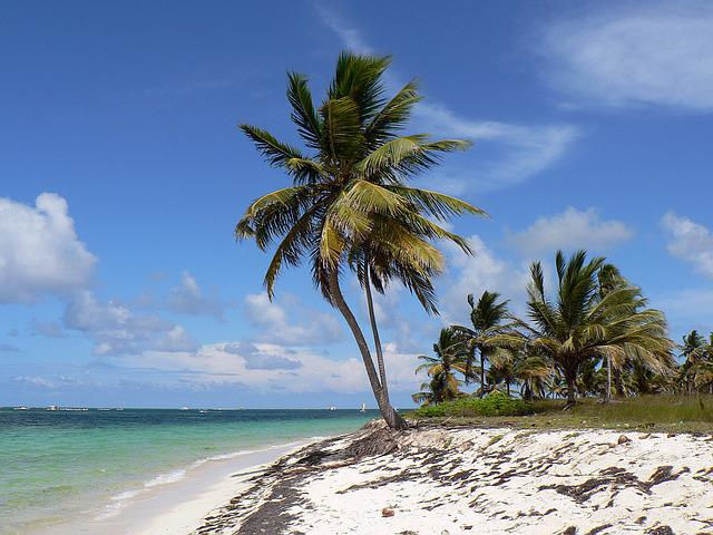 Dominican Republic, Punta Cana, Beach, Coconut, Sea