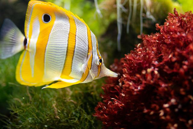 Fish, Aquarium, Underwater, Sea Creatures, Ocean