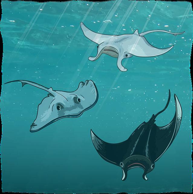 Scat, Sea Devil, Manta, Underwater, Ocean, Sea, Water