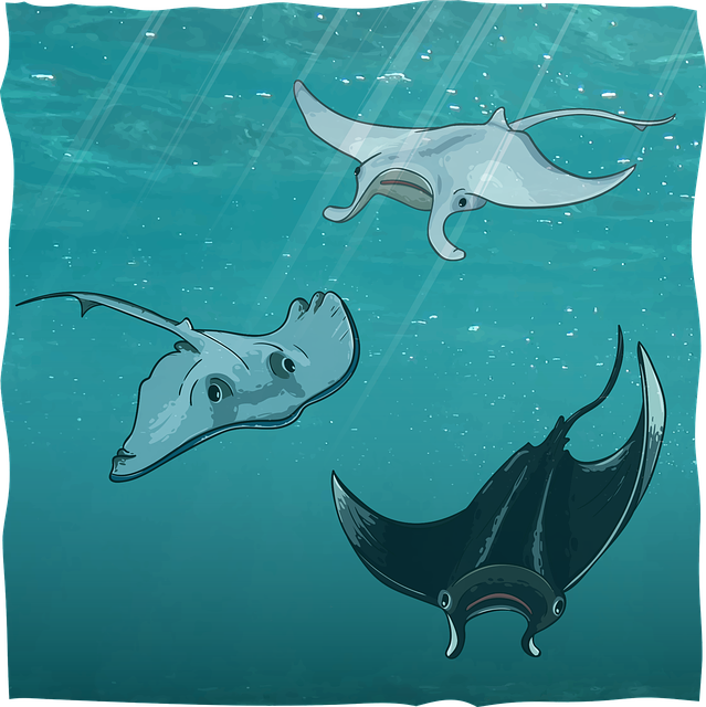 Scat, Sea Devil, Manta, Underwater, Ocean, Sea, Water