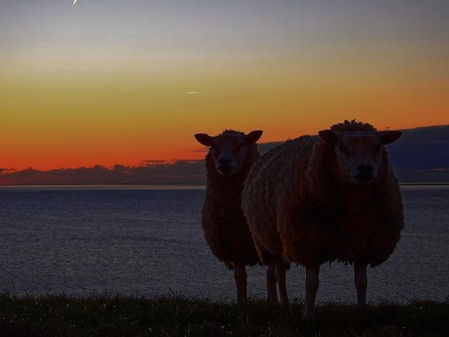 Sheep, Dike, Water, Sea, Lake, North Sea, Friesland