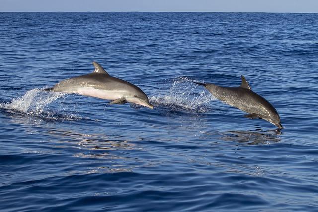 Animal, Dolphin, Waters, Meeresbewohner, Sea
