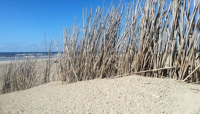 Dunes, Beach, Sea, Summer, North Sea, Sand, Dune Grass