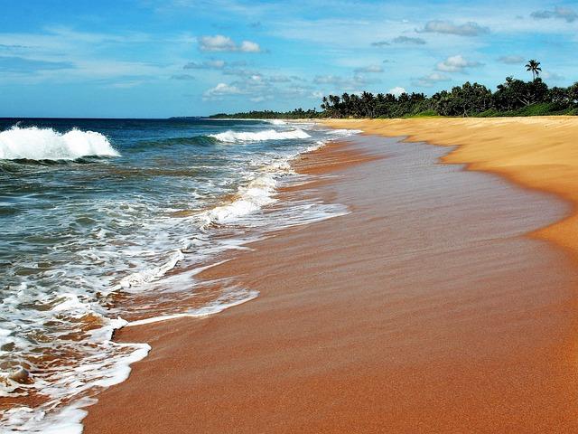 Relax, Water, Sea Foam, Beach, Palm Trees, The Horizon