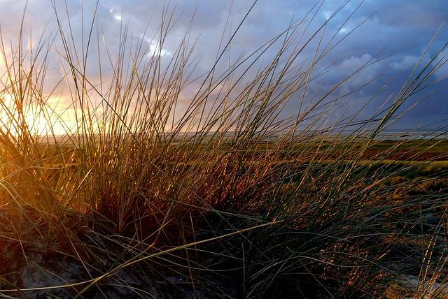 Sea Grass, Dune Grass, Dunes, Grasses, Sea, North Sea
