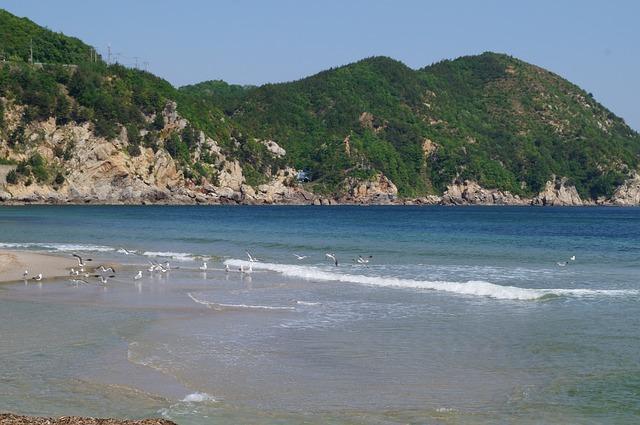 Sea, Seagull, Sky, Outdoor, New, Blue, Landscape, Beach