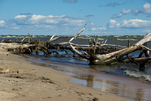 Latvia, Cape Kolka, Driftwood, Sea, Beach