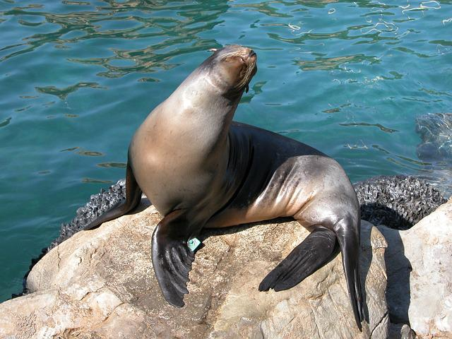 Seal, Animal, Aquarium, Sea Life, Wildlife, Wild