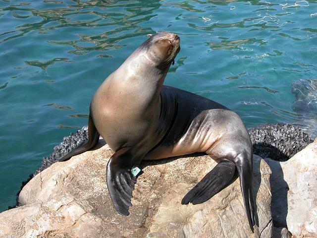 Seal, Animal, Aquarium, Sea Life, Wildlife, Wild