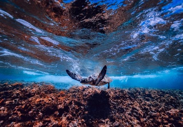 Sea, Ocean, Underwater, Turtle, Sea Life, Swimming