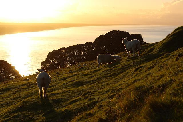 Meadow, Grass, Sea, Sheep, Mountain