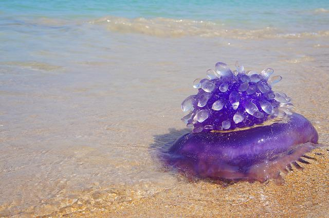 Medusa, Sea, Water, Nature, Marine, Wildlife, Tropical