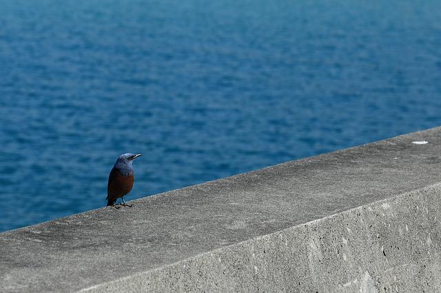 Method Bulbul, Okinawa, Bird, Sea, Breakwater