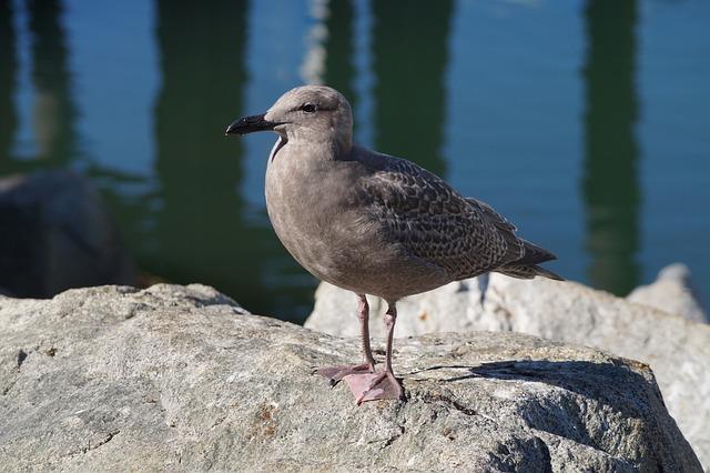 Ave, Seagull, Nat, Bird, Sea, Bird Watching, Nature