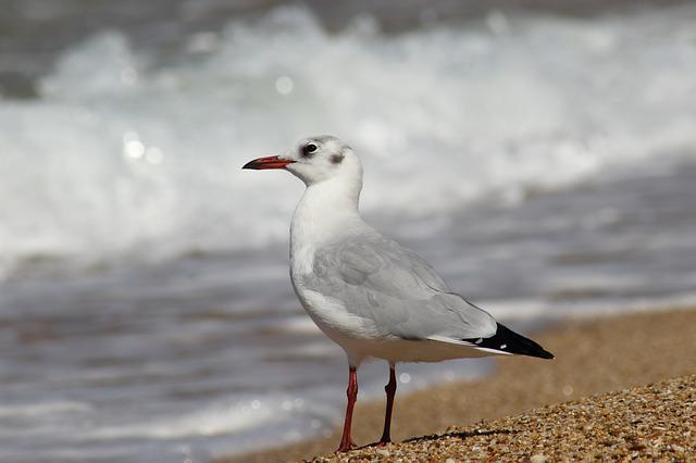 Bird, Nature, Living Nature, Sea, Beach, Animals