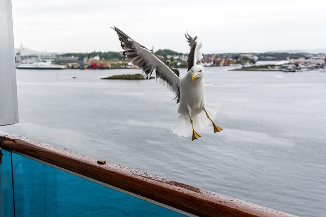 Waters, Sea, Nature, Travel, Sky, Bird, Gulls, Norway
