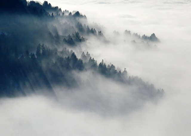Mountain, Forest, Clouds, Fog, Sea Of Clouds, Trees